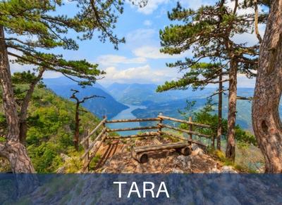 Kombi prevoz Tara